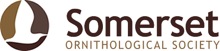 Somerset Ornithological Society Logo
