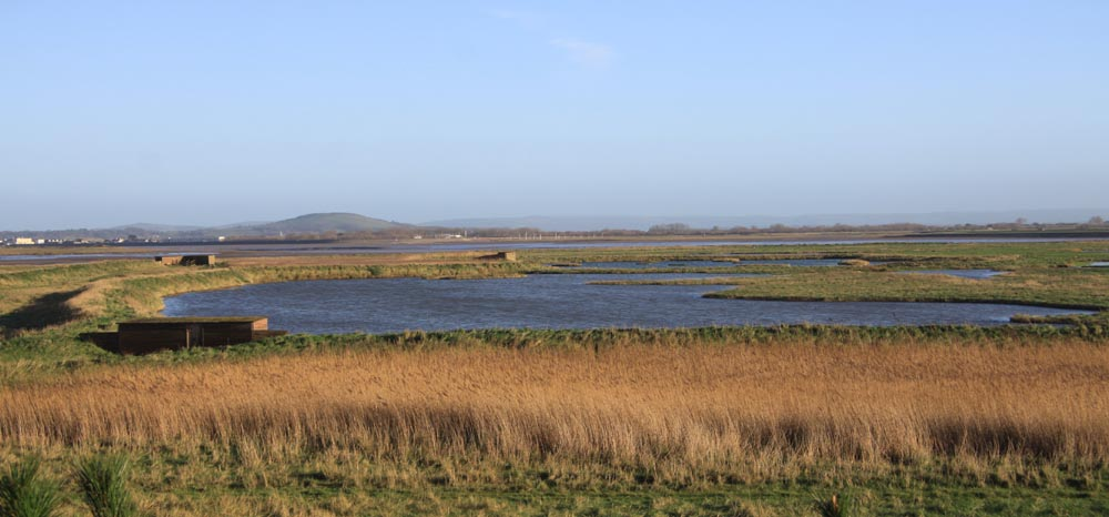 Steart (part of Bridgwater Bay NNR)